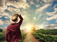 Crescimento, Exportação e Previsão para o Agronegócio Brasileiro